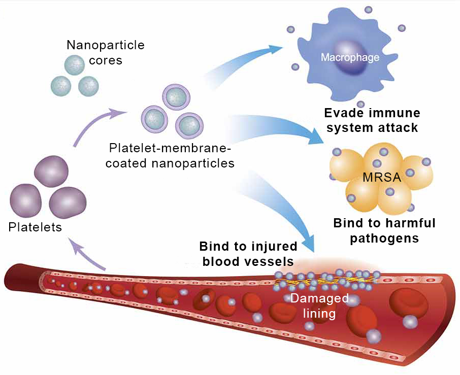 Targeted Drug Delivery With These Nanoparticles Can Make