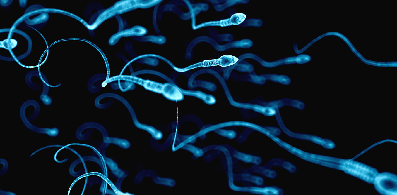 The Biggest Sperm Come In The Smallest Packagesand Other Surprising Facts About -9173