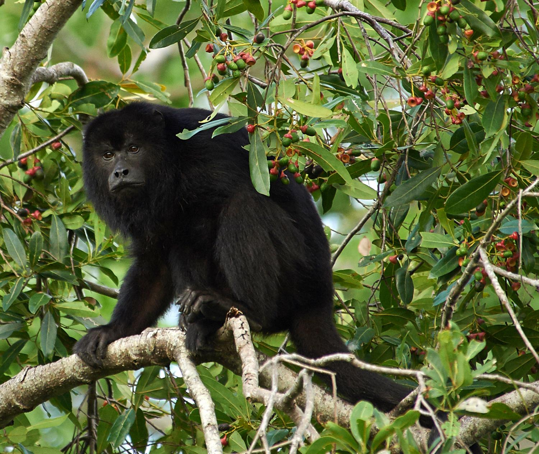 sociology of monkeys