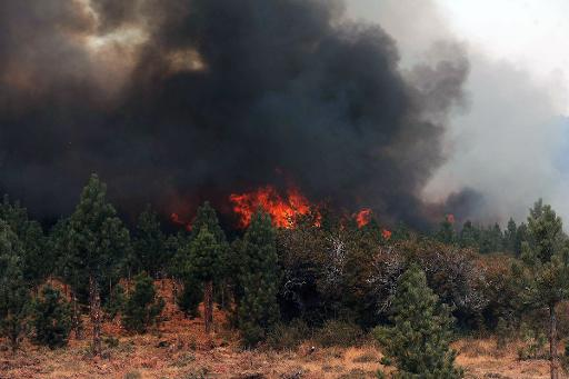 Arson To Blame For Argentine Forest Fires