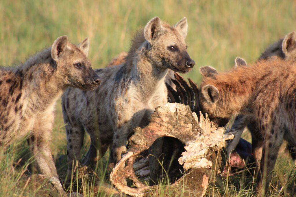 what makes a leader  clues from the animal kingdom
