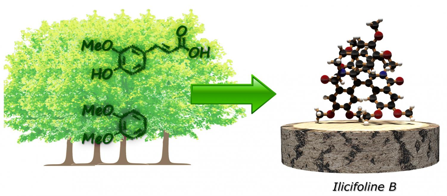 Wood Instead Of Petroleum New Approach To Producing
