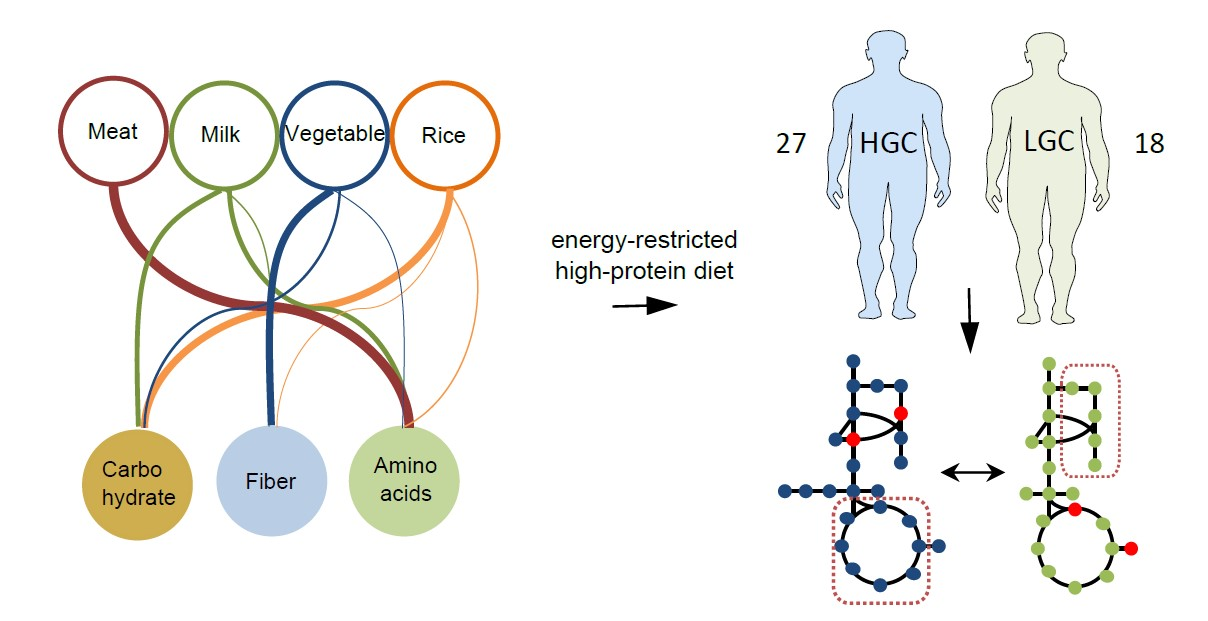 gut microbiome and weight loss