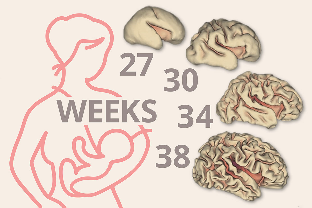 Breast Milk Linked To Significant Early Brain Growth In -6696