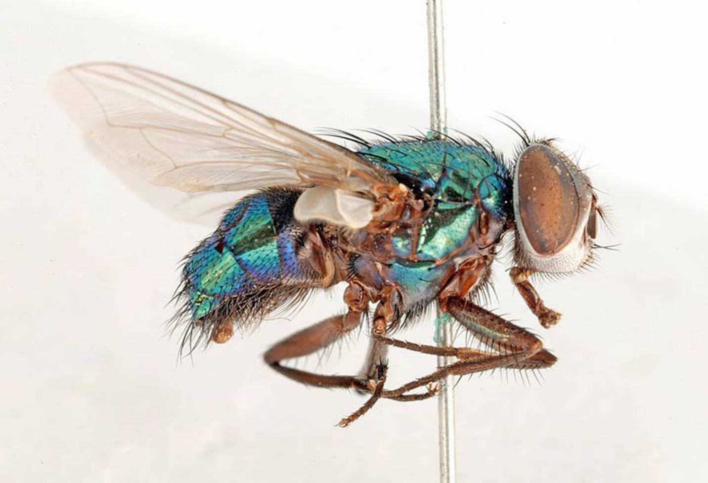 What Causes Flies In The House House Plan 2017