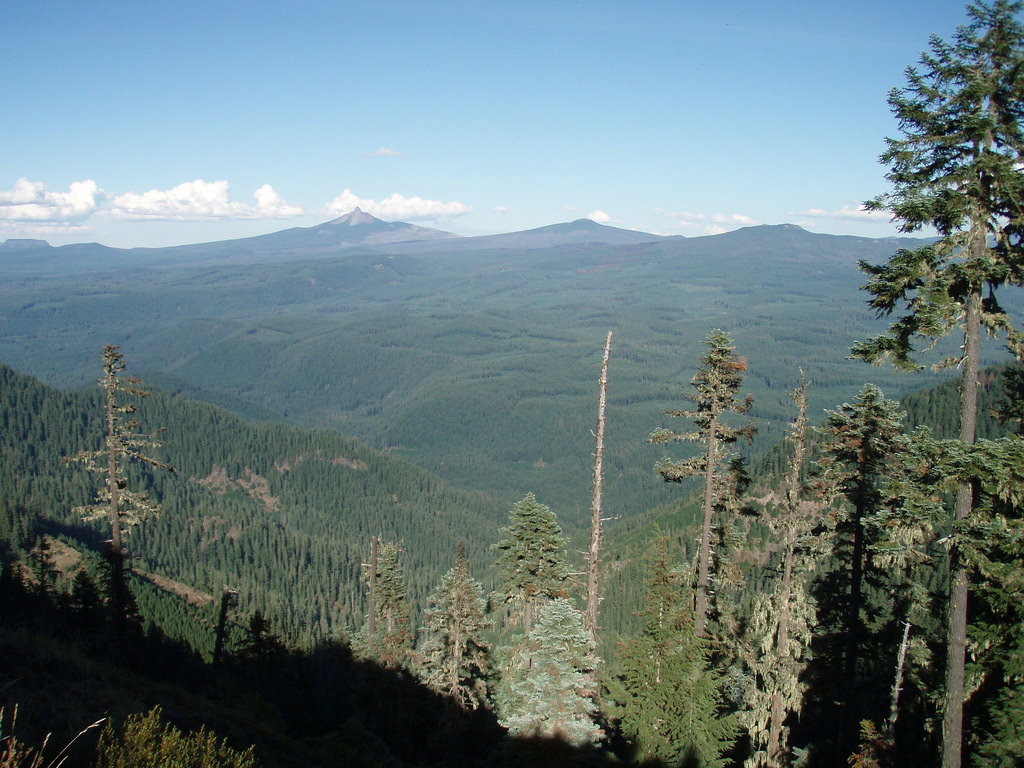 carbon stored in pacific northwest forests reflects timber harvest