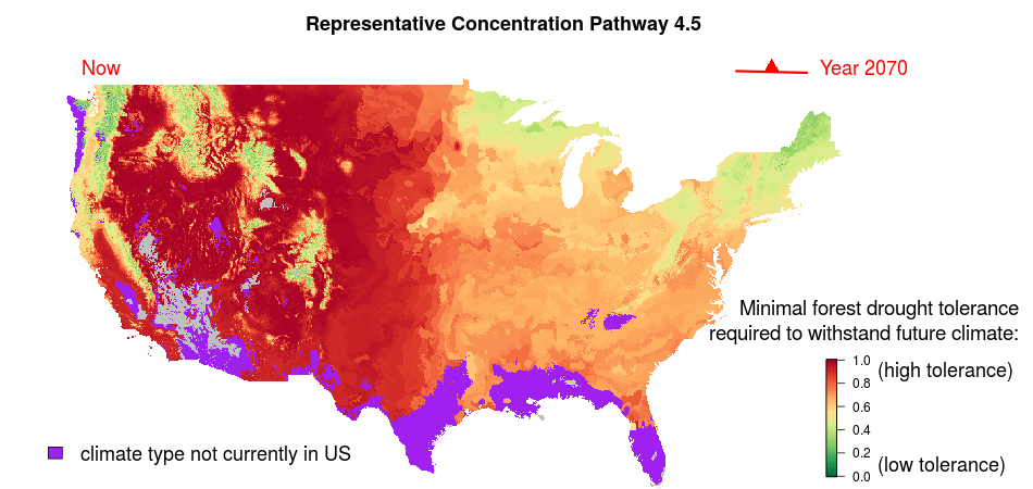 Model predicts how forests will respond to climate change