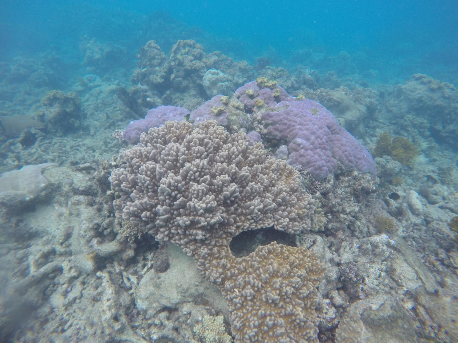 coral reef essay pixels begins study of s great barrier reef