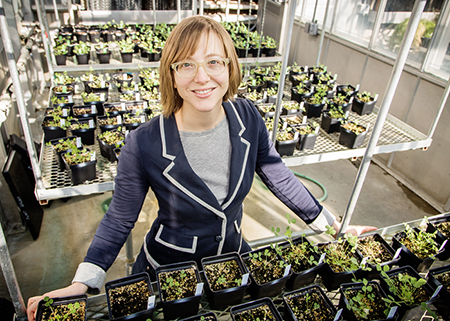 Study examines the effects of exposing legumes to nitrogen fertilizer
