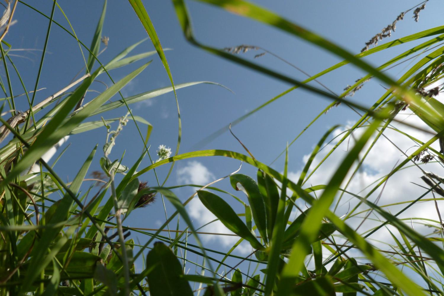 Plant response to carbon dioxide emissions depends on ...