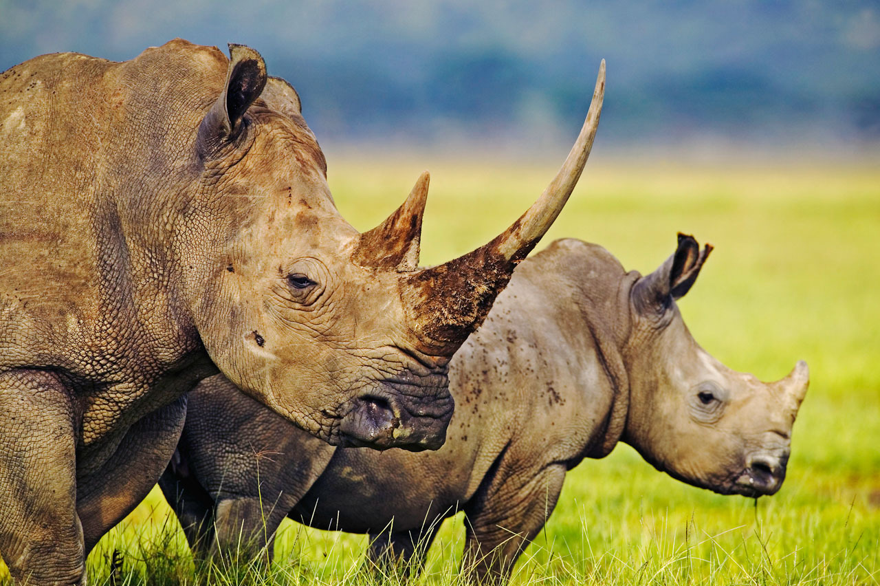N White Rhino Record year for...