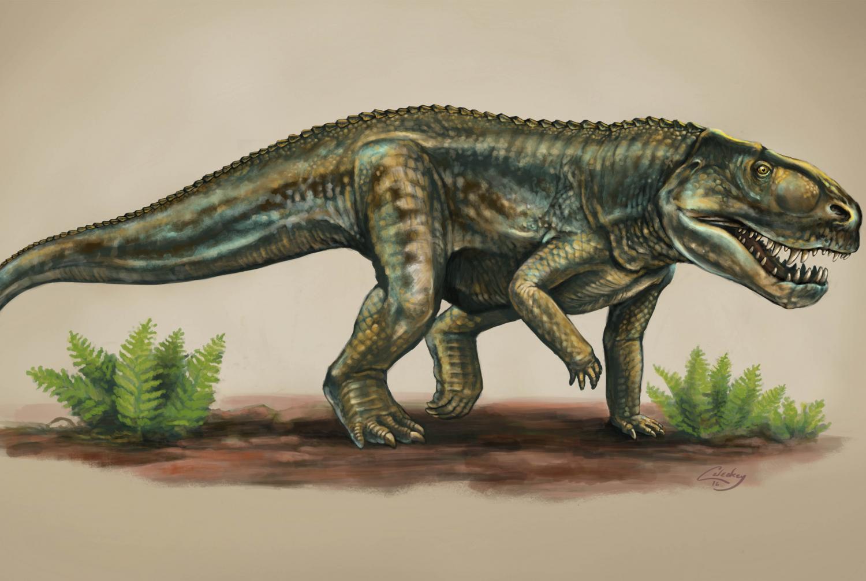 Reptiles: animal names with photos
