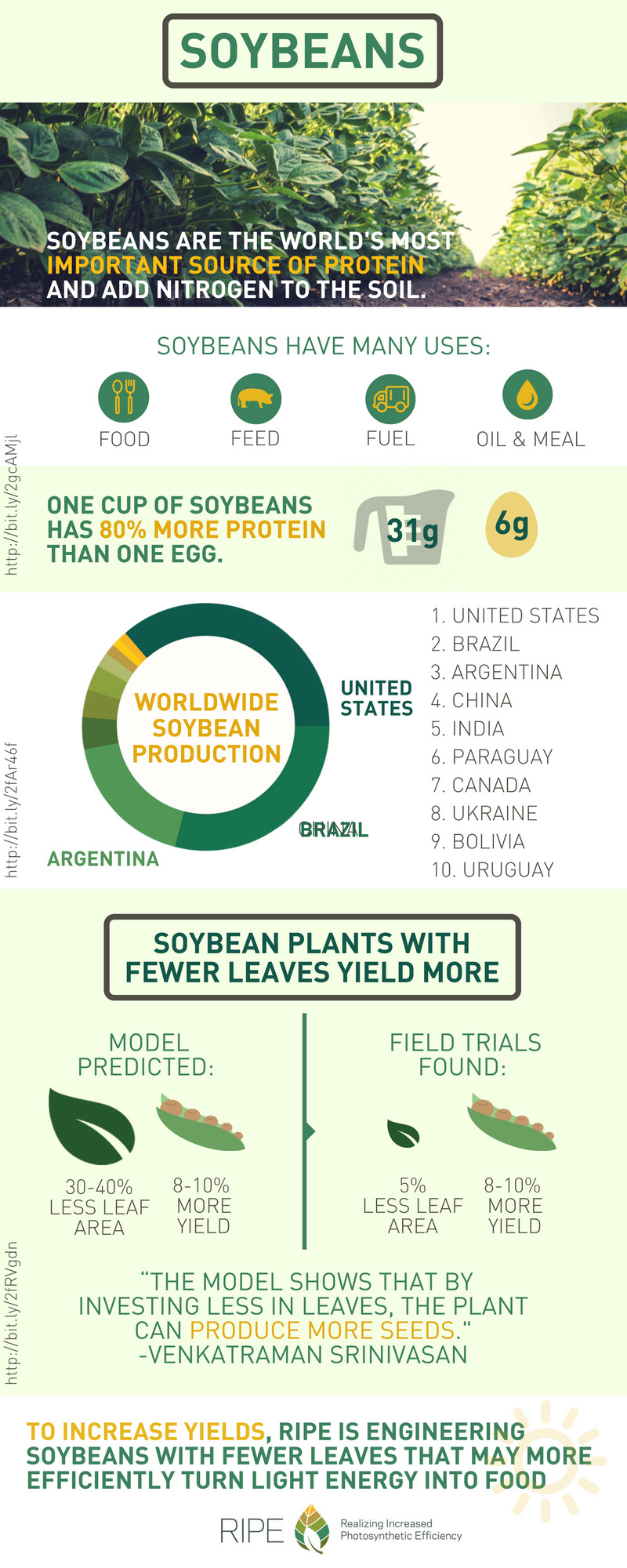 soybean plants with fewer leaves yield more