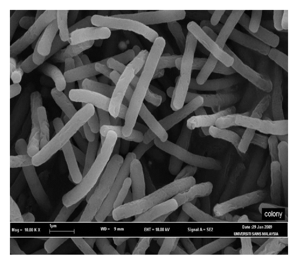 thesis on microbial enzymes