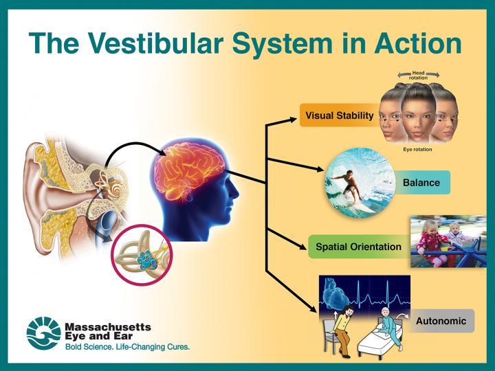 Vestibular function study