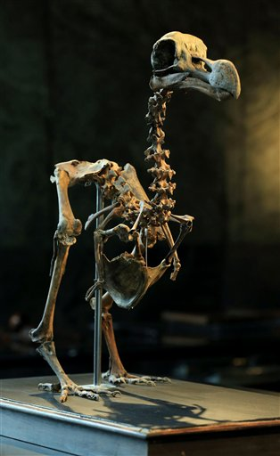 Complete Dog Skeleton For Sale