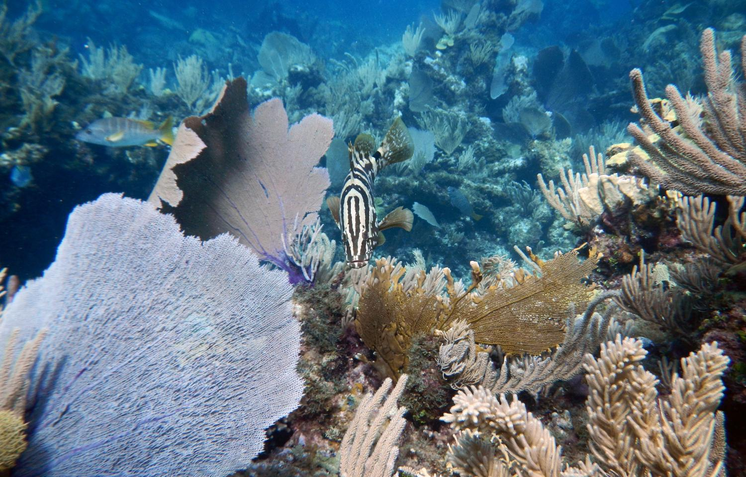 Big fish—and their pee—are key parts of coral reef ecosystems