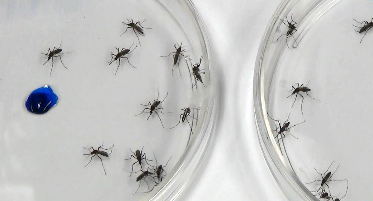 New discovery may improve future mosquito control