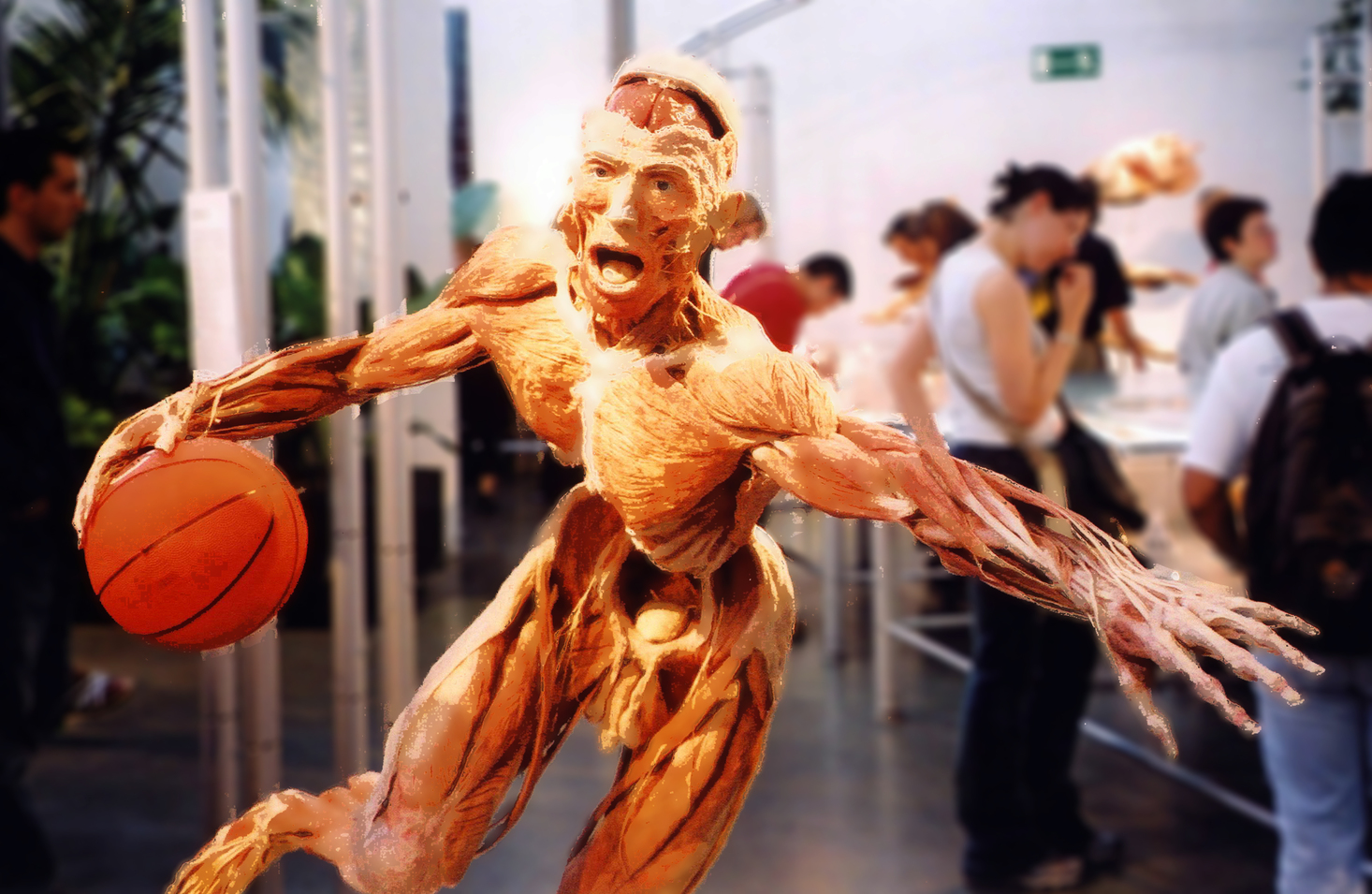 Reconsidering Body Worlds—why do we still flock to exhibits of dead ...
