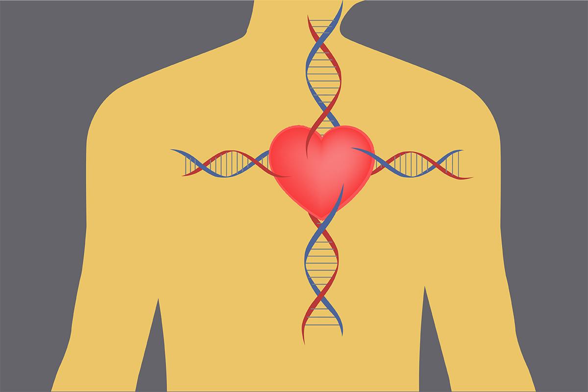 Картинки по запросу heart disease genetic
