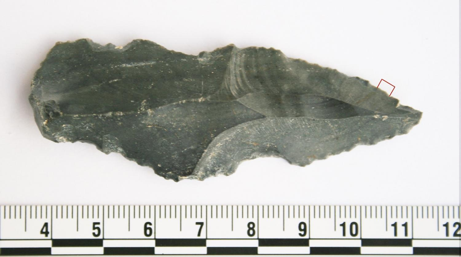 Archaeology Team Makes World First Tool Discovery