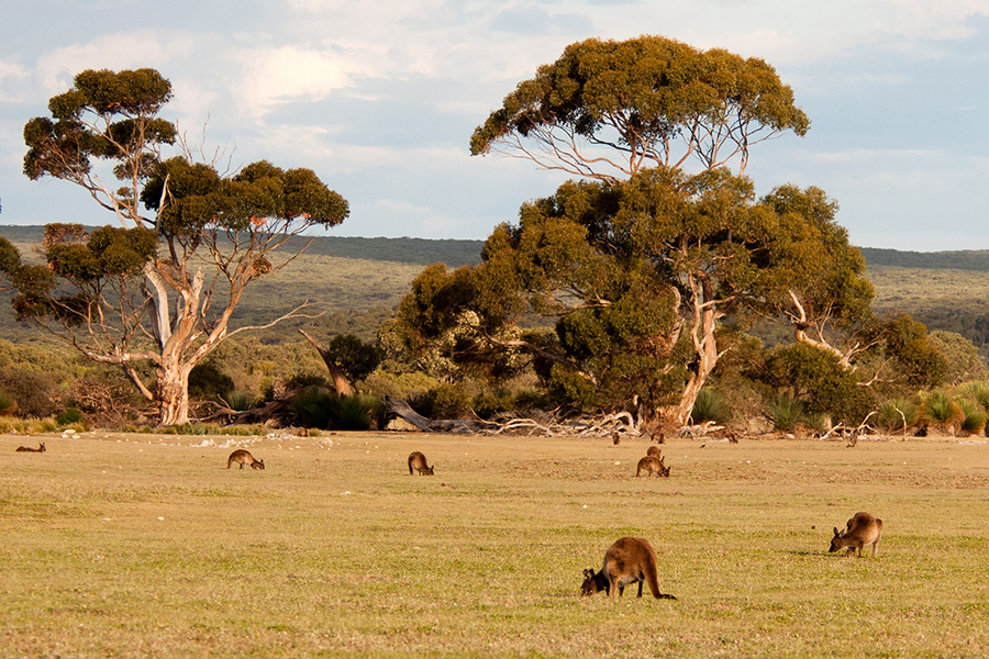 Kangaroo Island Could Be Powered By 100 Percent Renewable