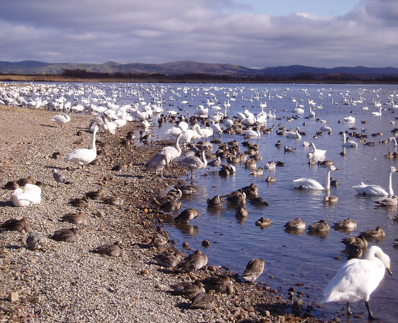 study of bird migration Every autumn, over 500 million birds cross israel's airspace, heading south to warming weather in africa israel sits on the junction of three continents, says dr yossi leshem, director of israel's international centre for the study of bird migration.