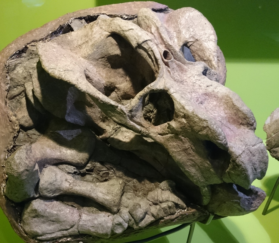 What Our Ancestors Third Eye Reveals About The Evolution Of Mammals