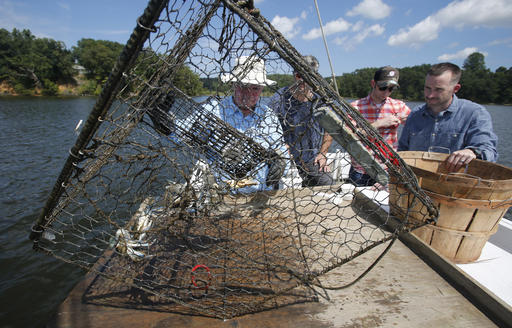 an analysis of crabs for the crabber Licensed crabber george sweetman won't be able to fish in the indian while crab harvests can according to a florida today analysis of.