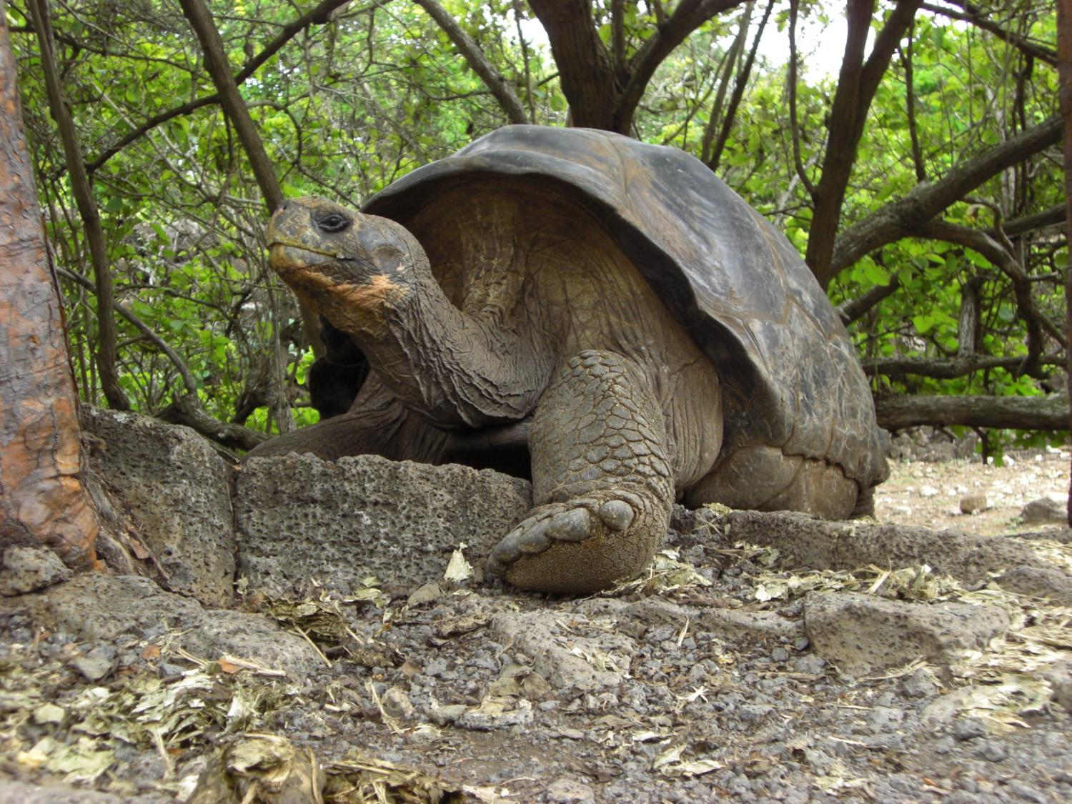 Image result for further science in the Galapagos Islands