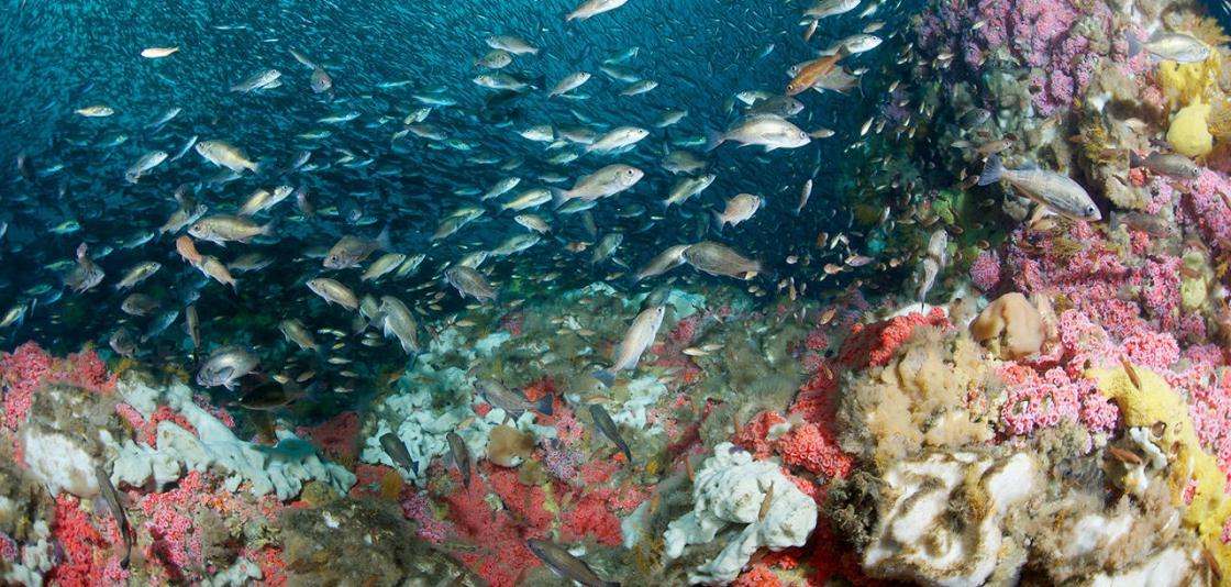 America S Astounding Progress In Ending Overfishing