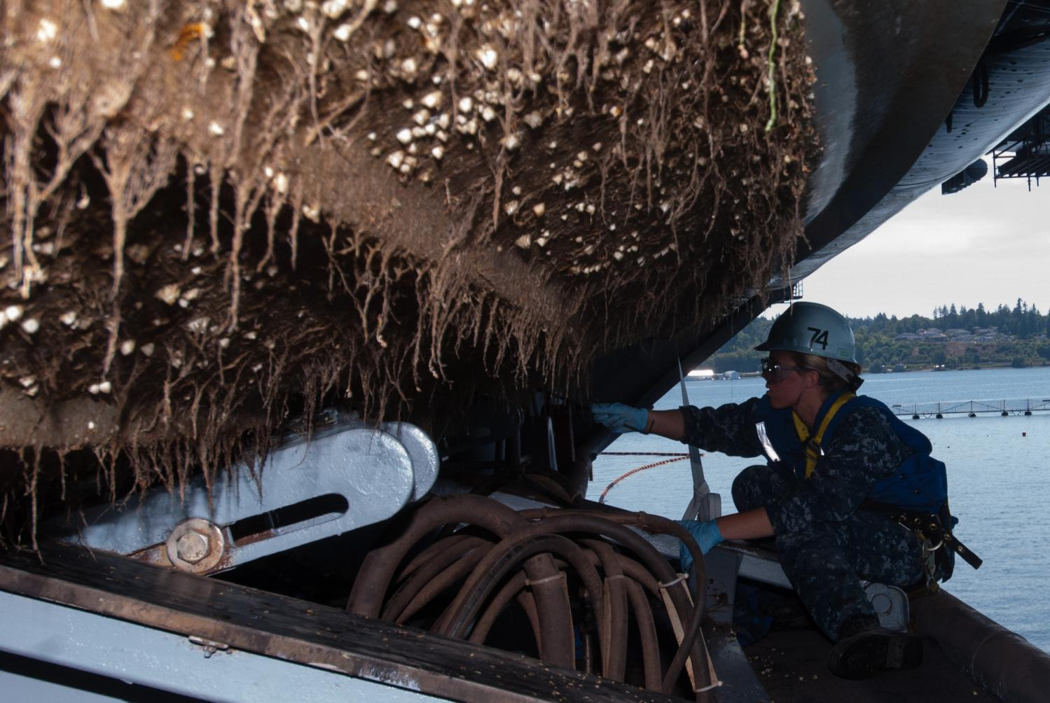 Barnacle busting: Research targets ship biofouling