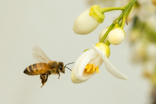 Bee Health 101 - Bayer