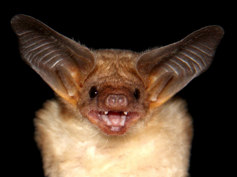 Bats 29