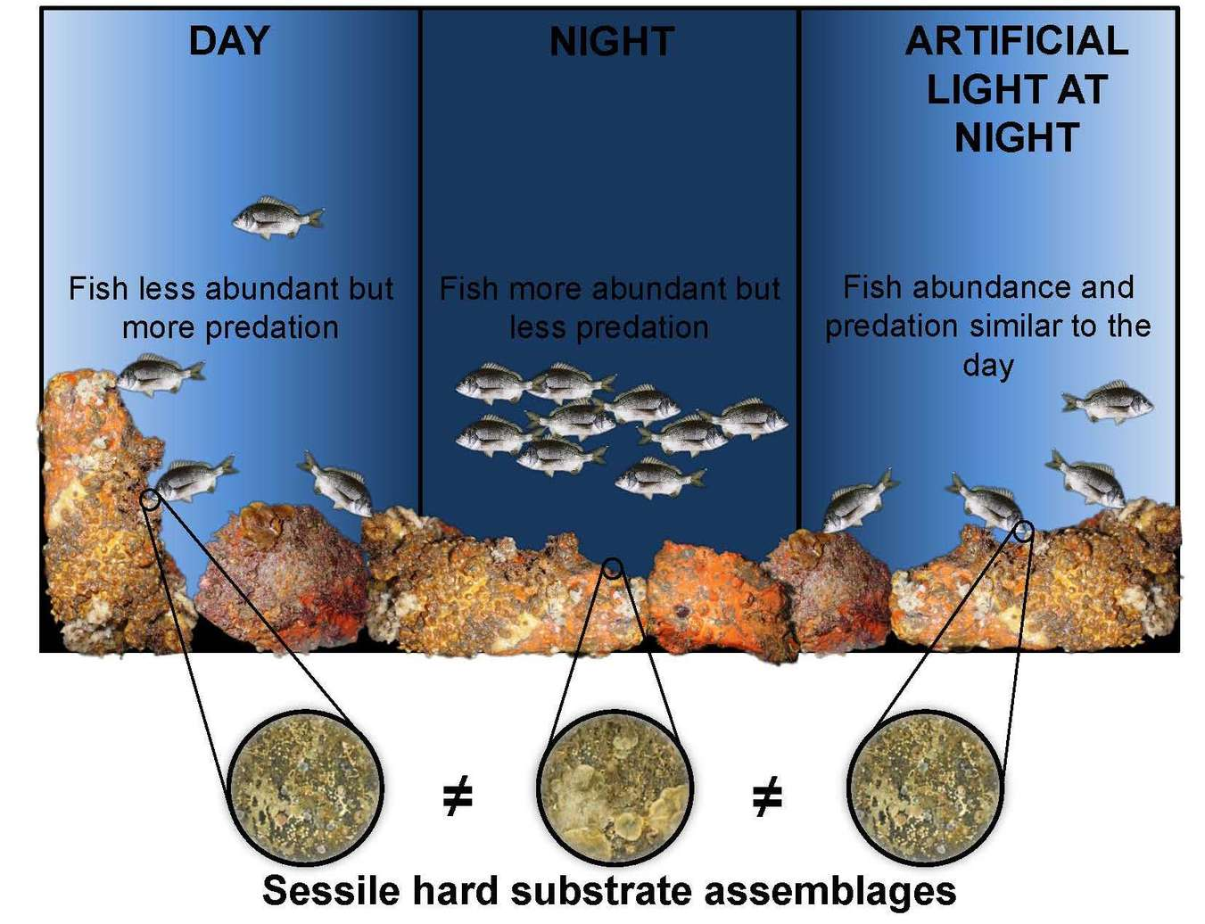 576, Bolton Et Al., Coastal Urban Lighting Has Ecological Consequences For  Multiple Trophic Levels Under The Sea, Pp1 9, Copyright (2017), With  Permission ...