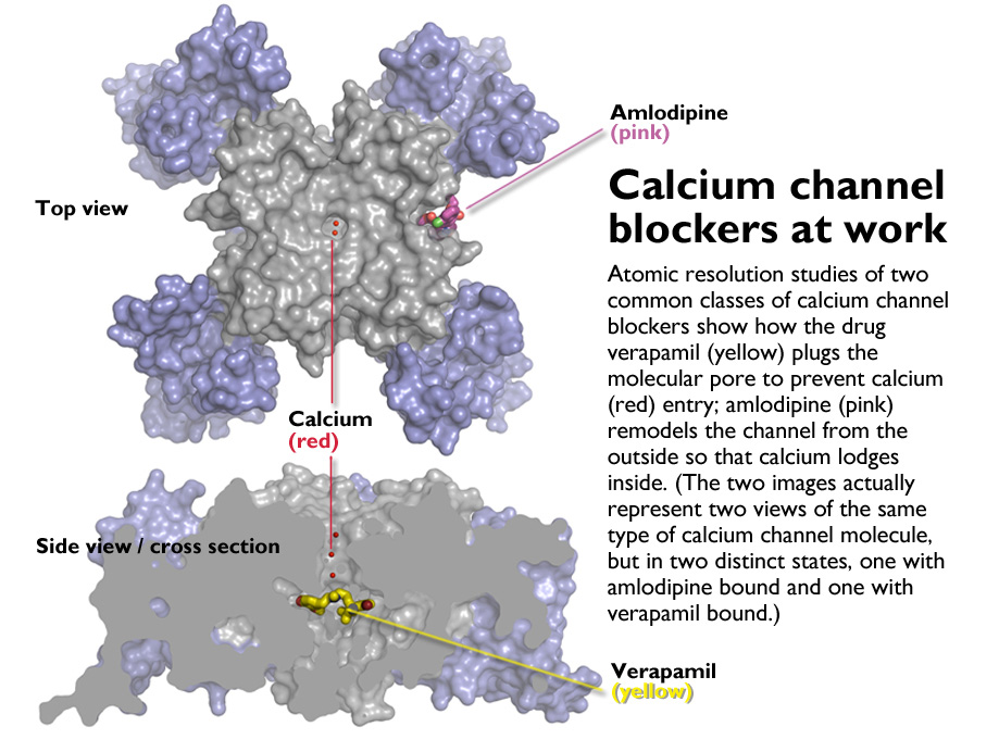 channel blockers caught in the act at atomic level, Skeleton