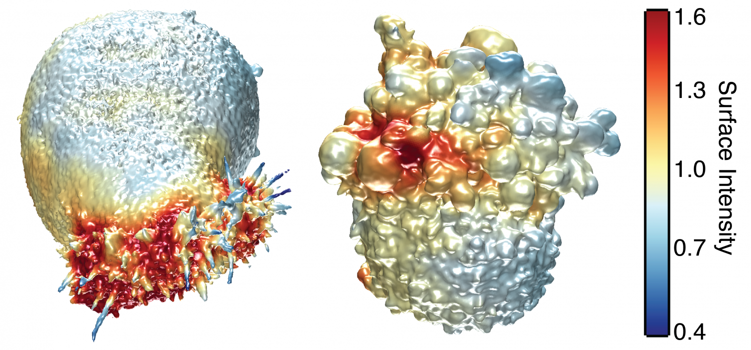 Seeing cancer cells in 3-D (w/ Video)
