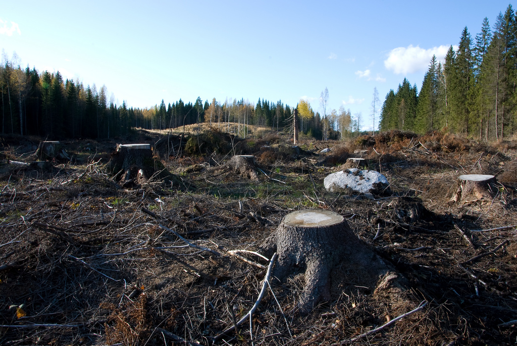 a report on the destruction of forests and the effects of cutting and replanting on global warming Major causes of deforestation many forest cover has been environmental effects like global warming or replanting the clear-cutting of.