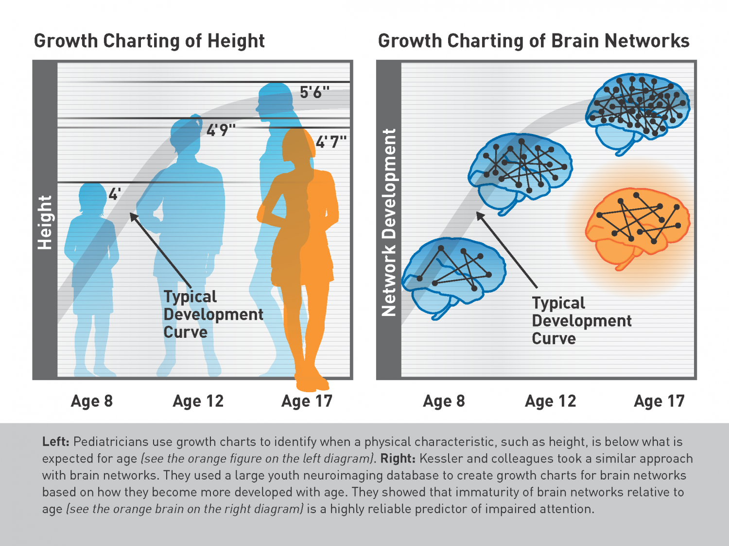 A brain growth chart spot attention problems early new study could a brain growth chart spot attention problems early new study suggests so geenschuldenfo Gallery