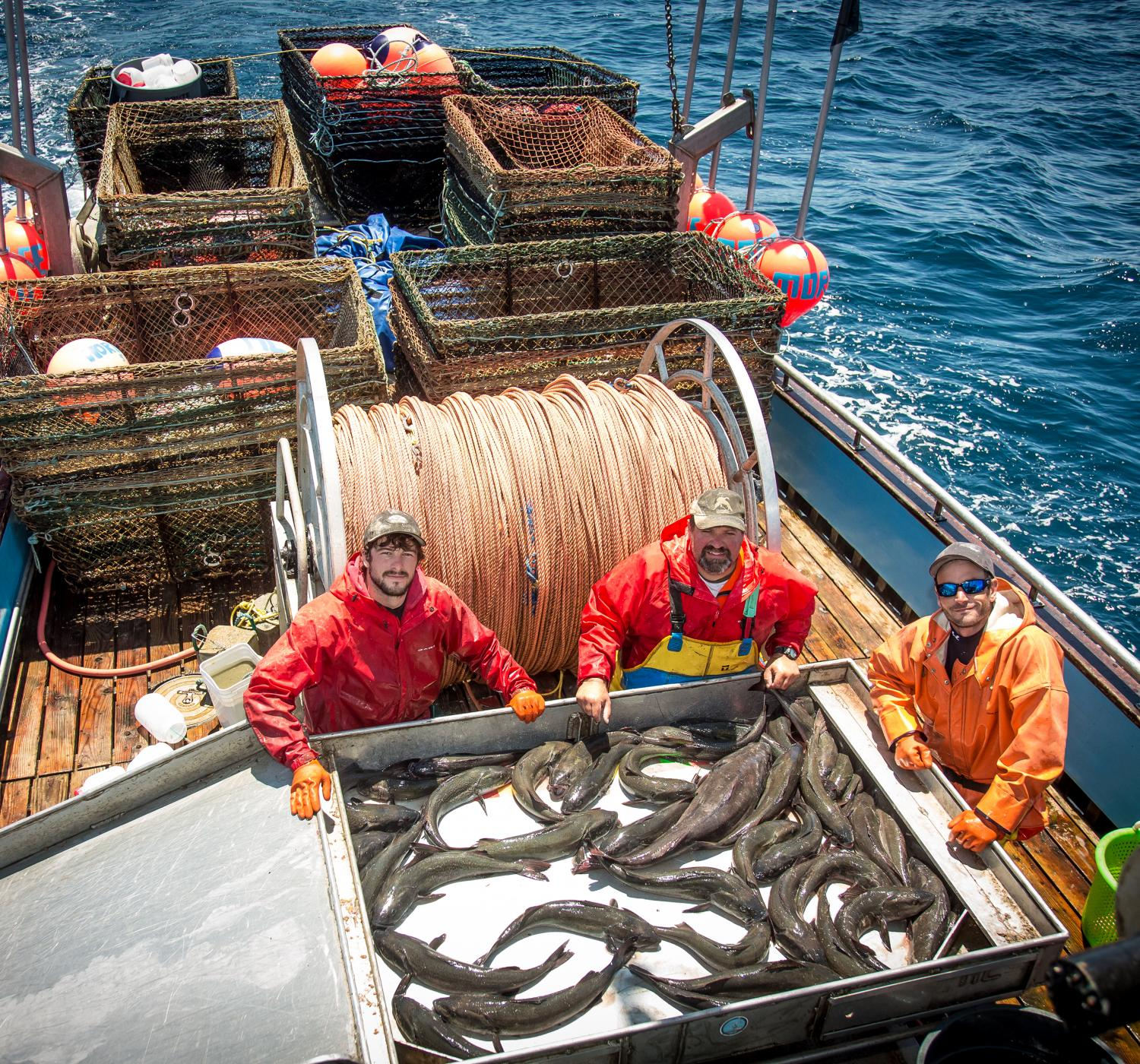 Dangerous fishing may be endangered for What is commercial fishing