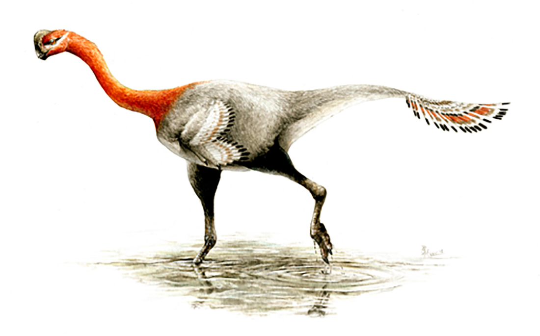 Maybe You Could Say Which Of The Two Images Provided And Here Is Accurate What Does A Deinonychus Actually Look Like
