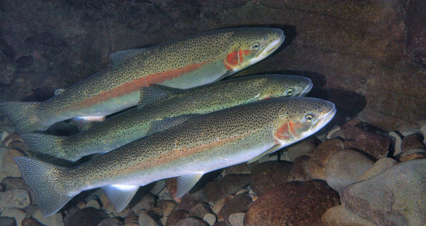 ODFW Fishing Resources - dfw.state.or.us