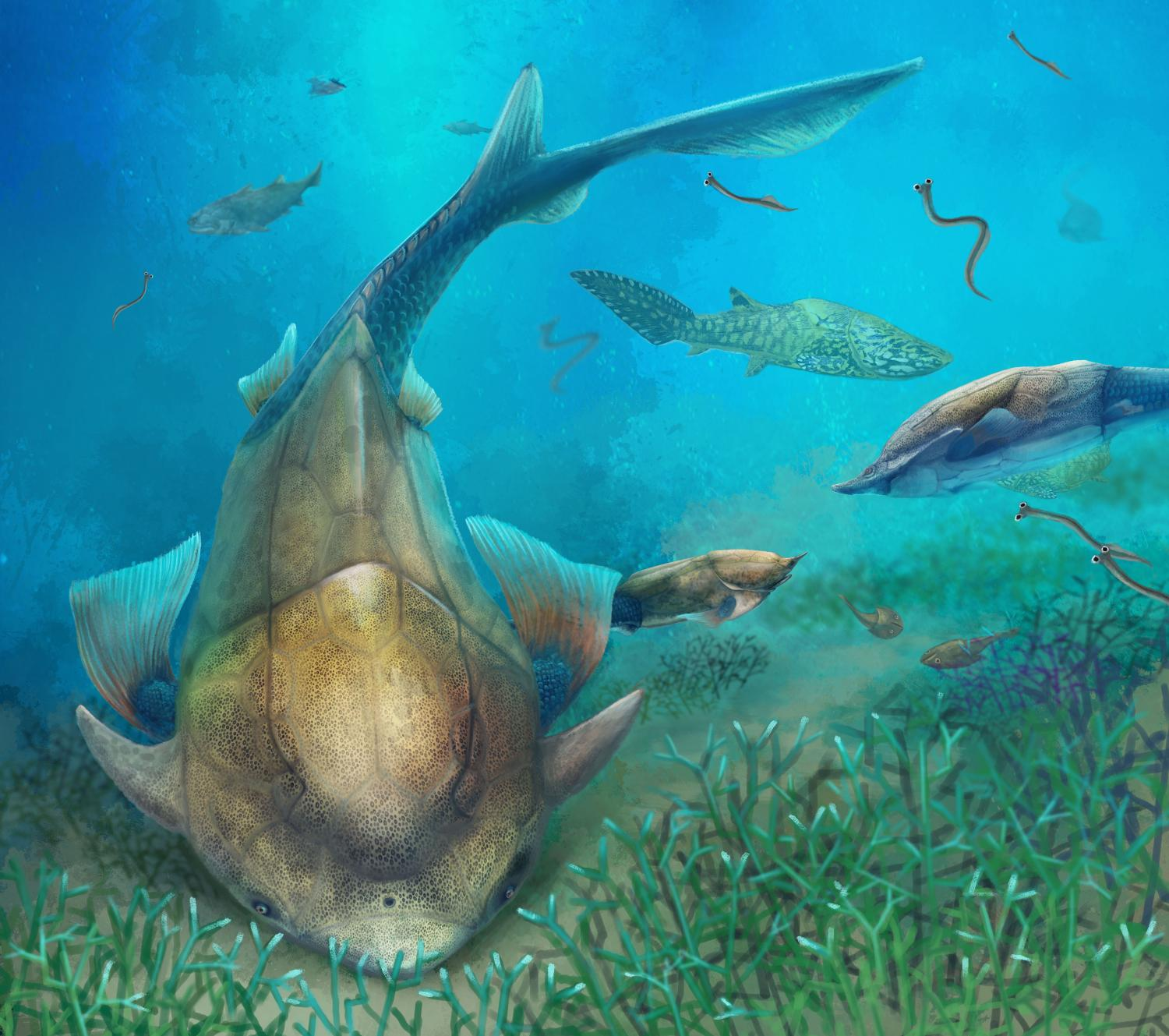 Early fossil fish from china shows where our jaws came from for Fish without bones