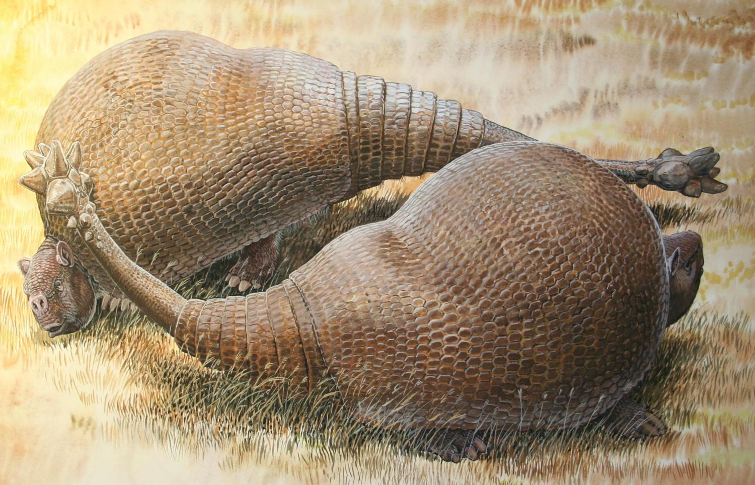 Extinct glyptodonts really were gigantic armadillos