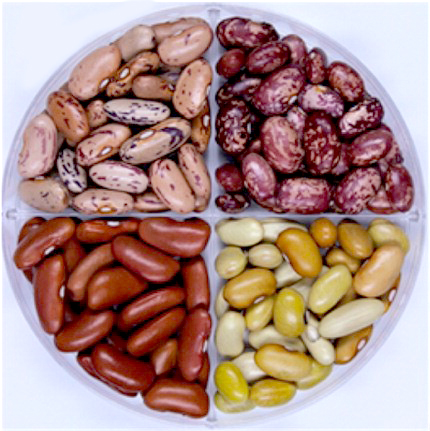 Fast-cooking dry beans provide more protein, iron than ...