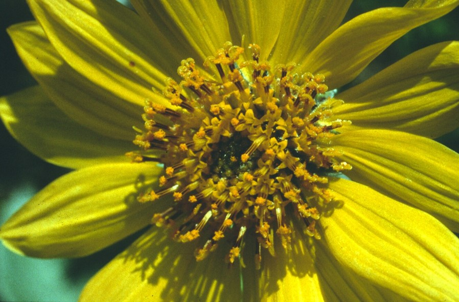 Flight Of The Bumble Bee Reveals Plants Flair For Flower Arranging