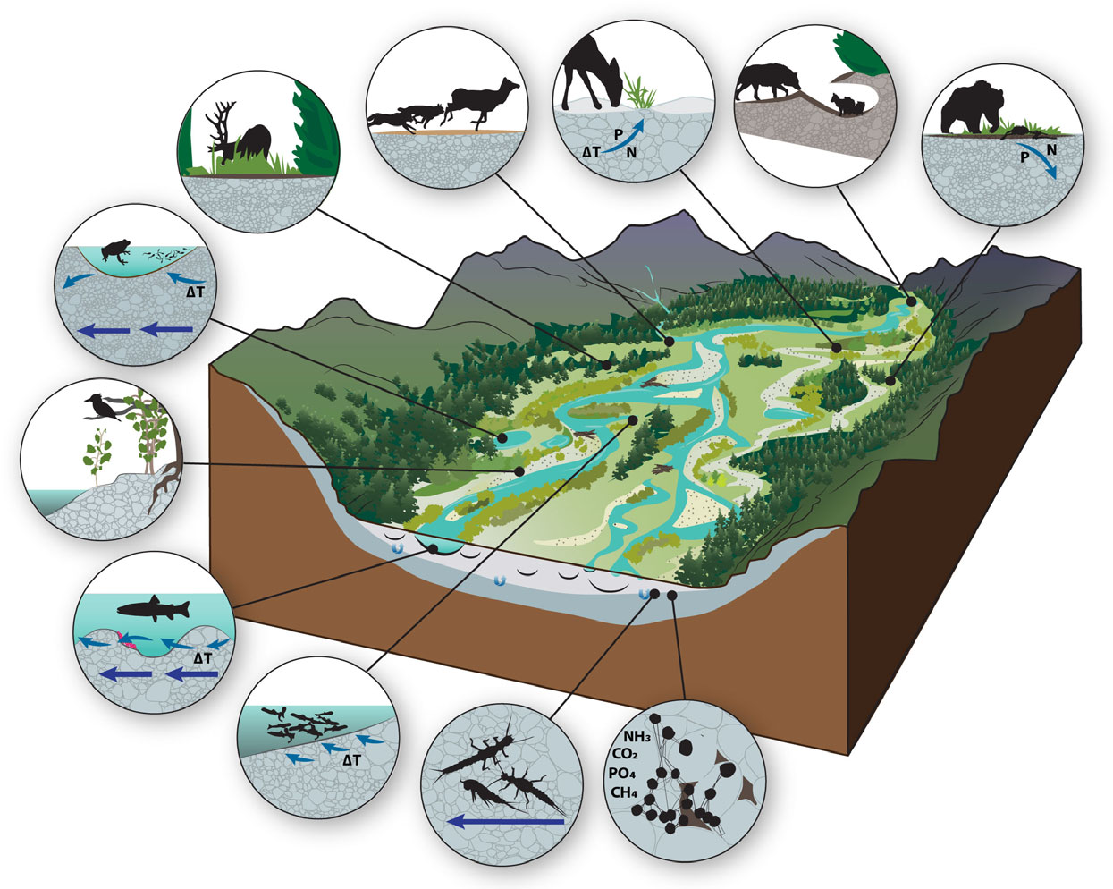 Nature Gravelbed Rivers Most Important Feature In Mountainous - Importance of rivers