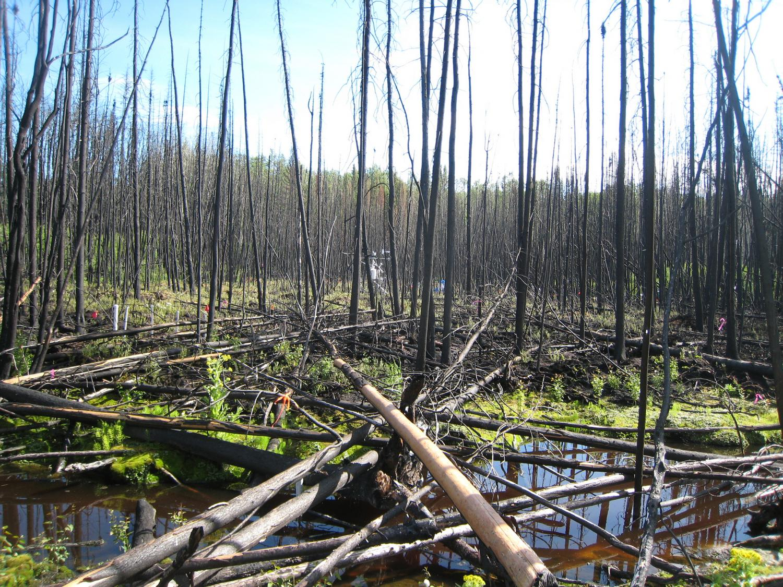 Impacts of human activities on natural hazards