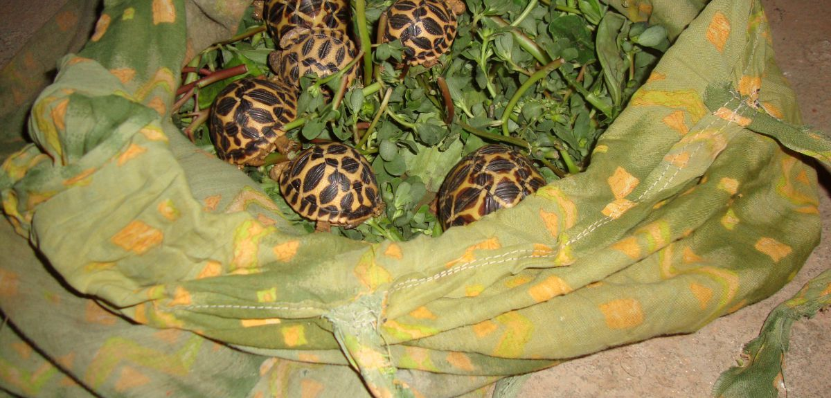 gaps in data place thousands of illegally traded wild animals at
