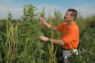 resistance in waterhemp continues to grow